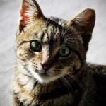 Garden Court Kitty